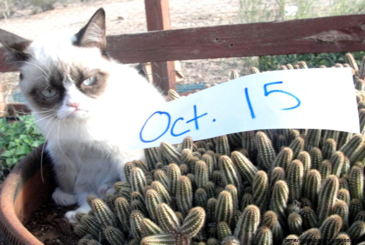 grumpy cat tard the daily grump tardar sauce tard the grumpy cat