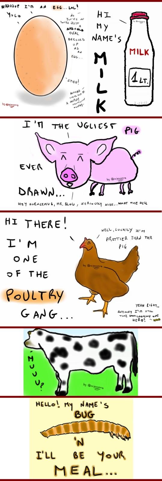 Disegno delle fonti di proteine animali di cui parla il post: uova, latte, carne di maiale, pollame, ruminanti e infine insetti (by sciencemug)