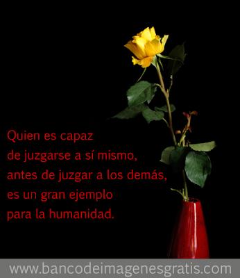 Rosa amarilla con hermosa reflexión para compartir en redes sociales