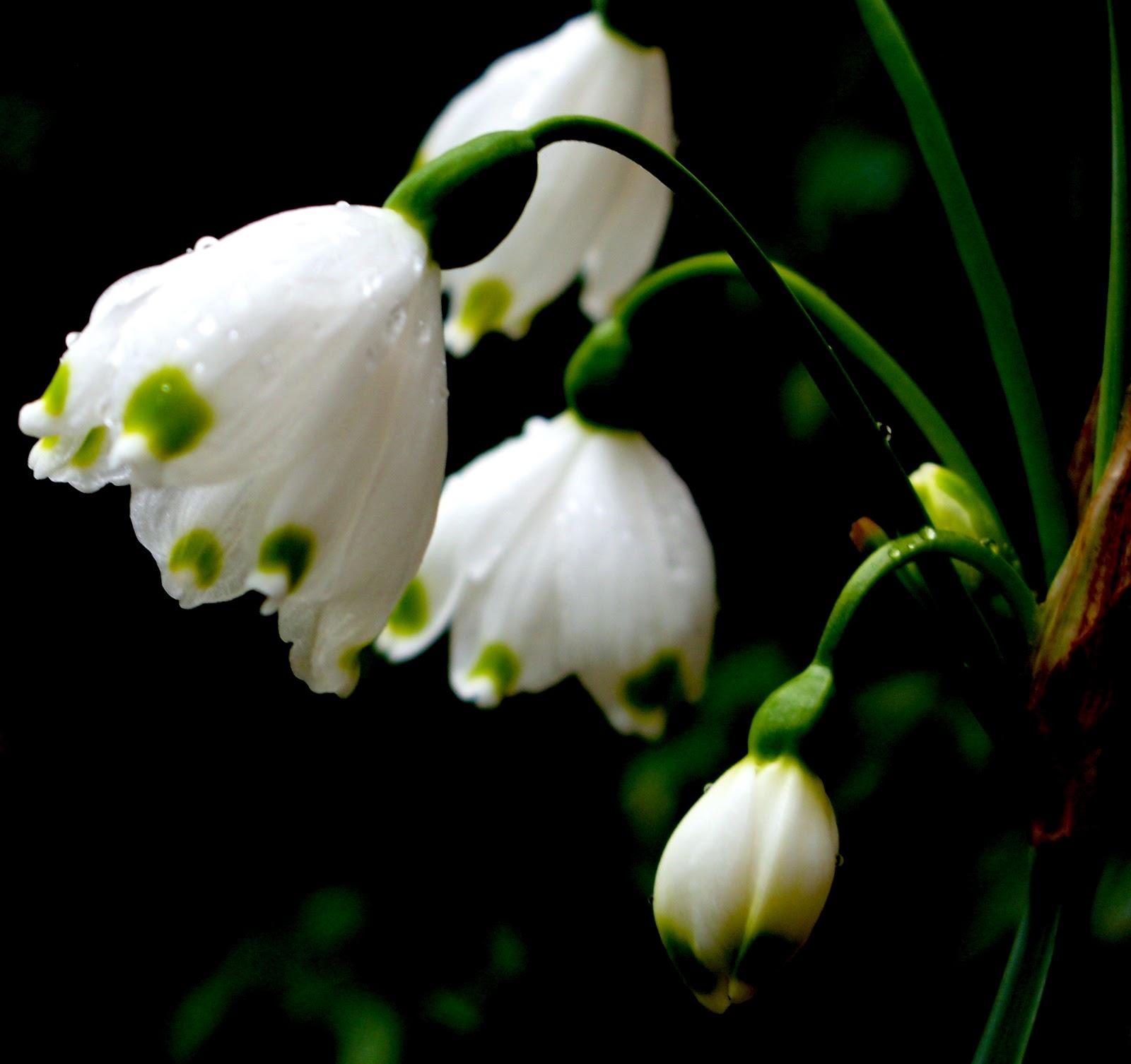 per oborr lule ditelindje foto te bukura msn picture