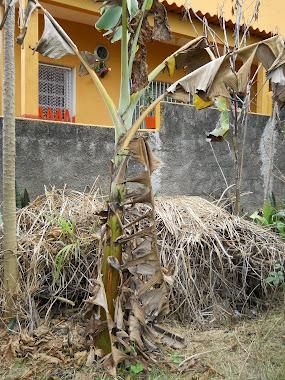 Blogueira sob risco de morte sofre Violação de domicílio e crime ambiental