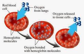Obat Tradisional Penurun Gula Darah