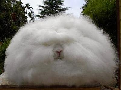 بالصور شاهد اغرب ارنب على مستوى العالم