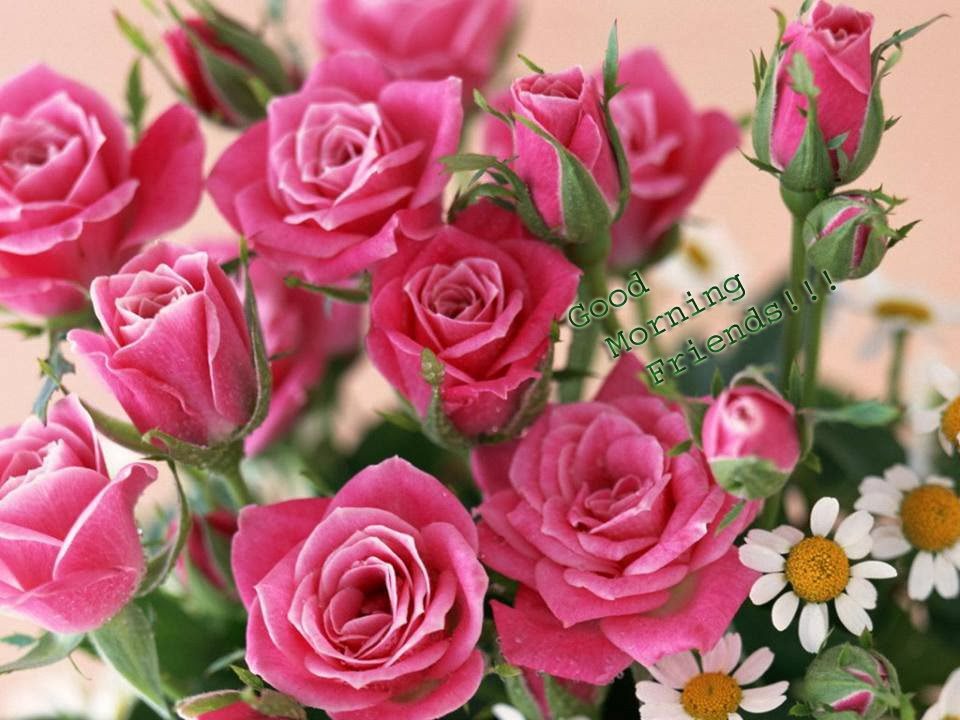 good morning with blooming roses