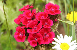 Names of Red Flowers List