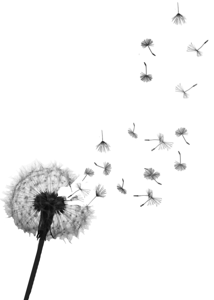 Dandelion Tattoos Designs And Meaning