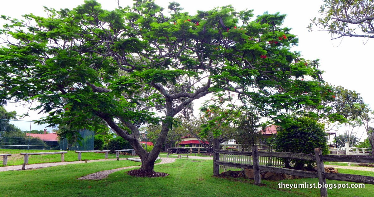 Spa Anise, Spicers Hidden Vale, Queensland