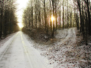 éberség : téli fák