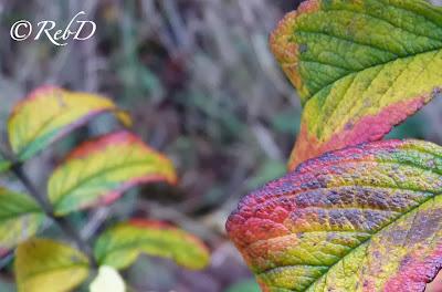 löv som är gula, gröna och röda. foto: Reb Dutius