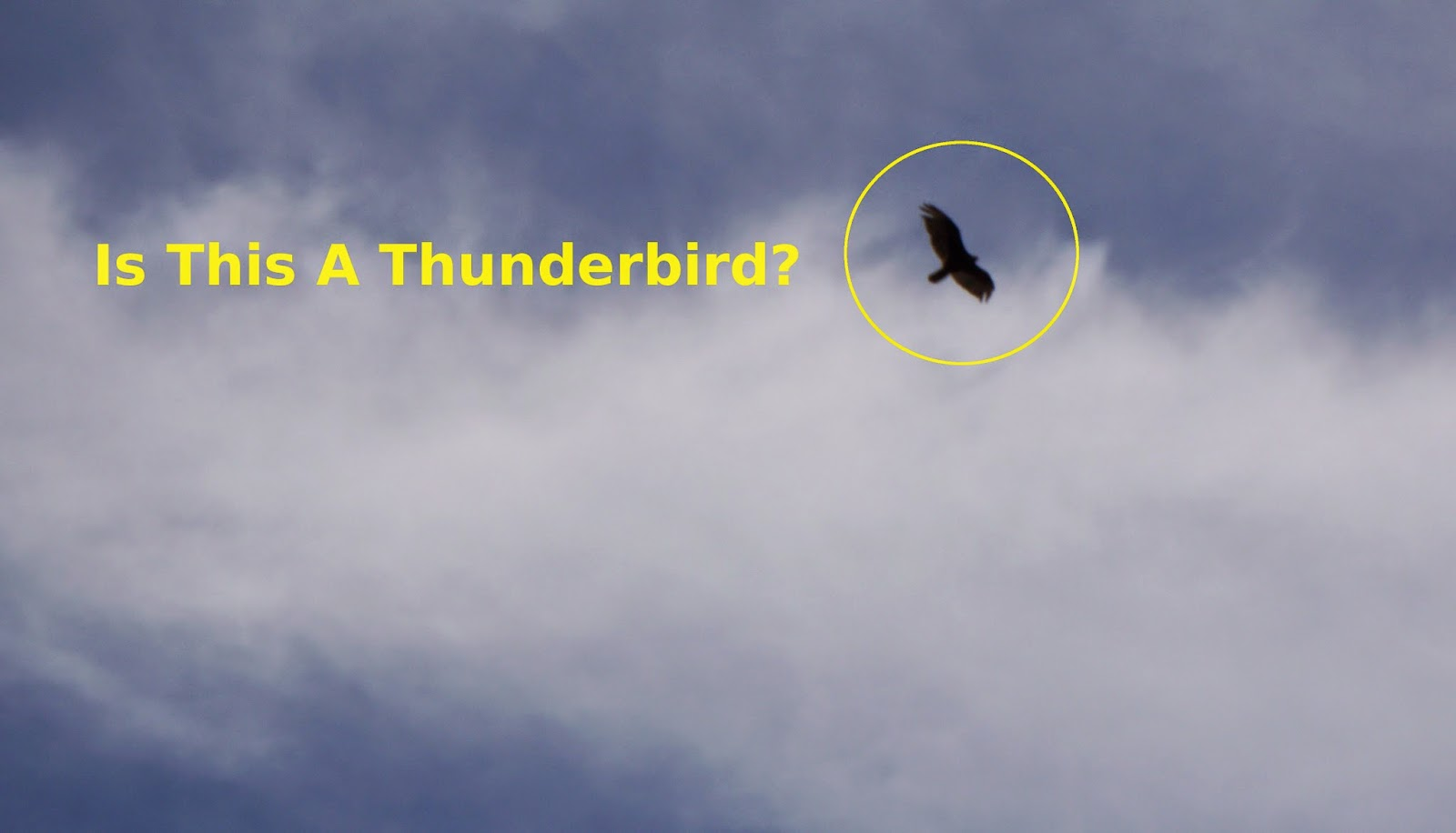 could it be a real Thunderbird