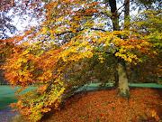 La Ruska: El Otoño en Finlandia couleurs d'automne
