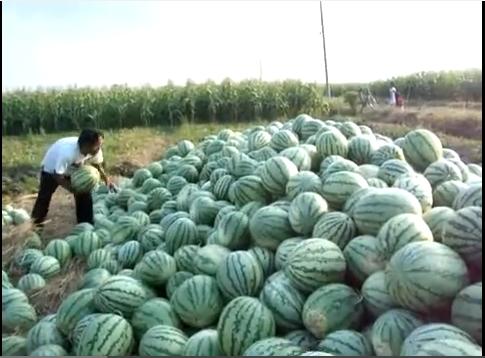semangka nya benar-benar mak nyos