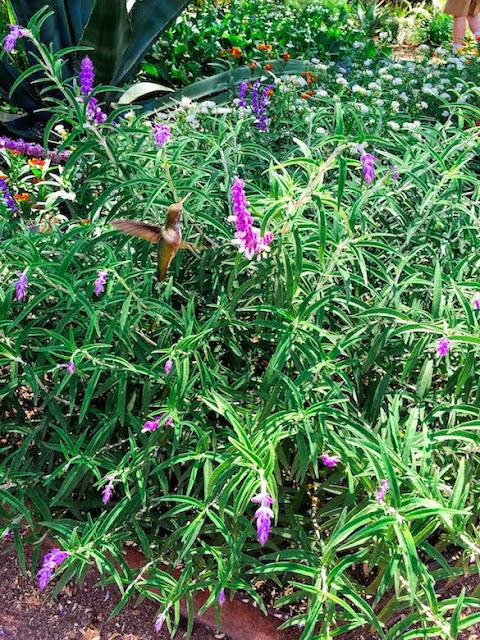 Desert Botanical Gardens Edible Garden