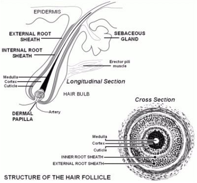Forensics: Forensics Project Part II: Hair and Fiber Analysis