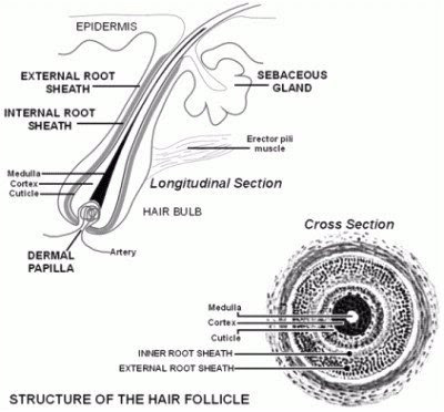 Forensics Forensics Project Part II Hair And Fiber Analysis