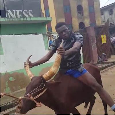 Comedian Akpororo riding his cow to Warri,Akpororo on a cow,Akpororo rides a cow,Akpororo and cow 7
