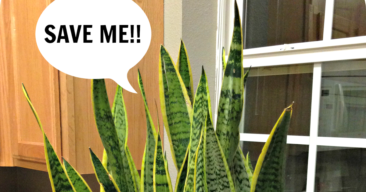 danshui plant 2 answer
