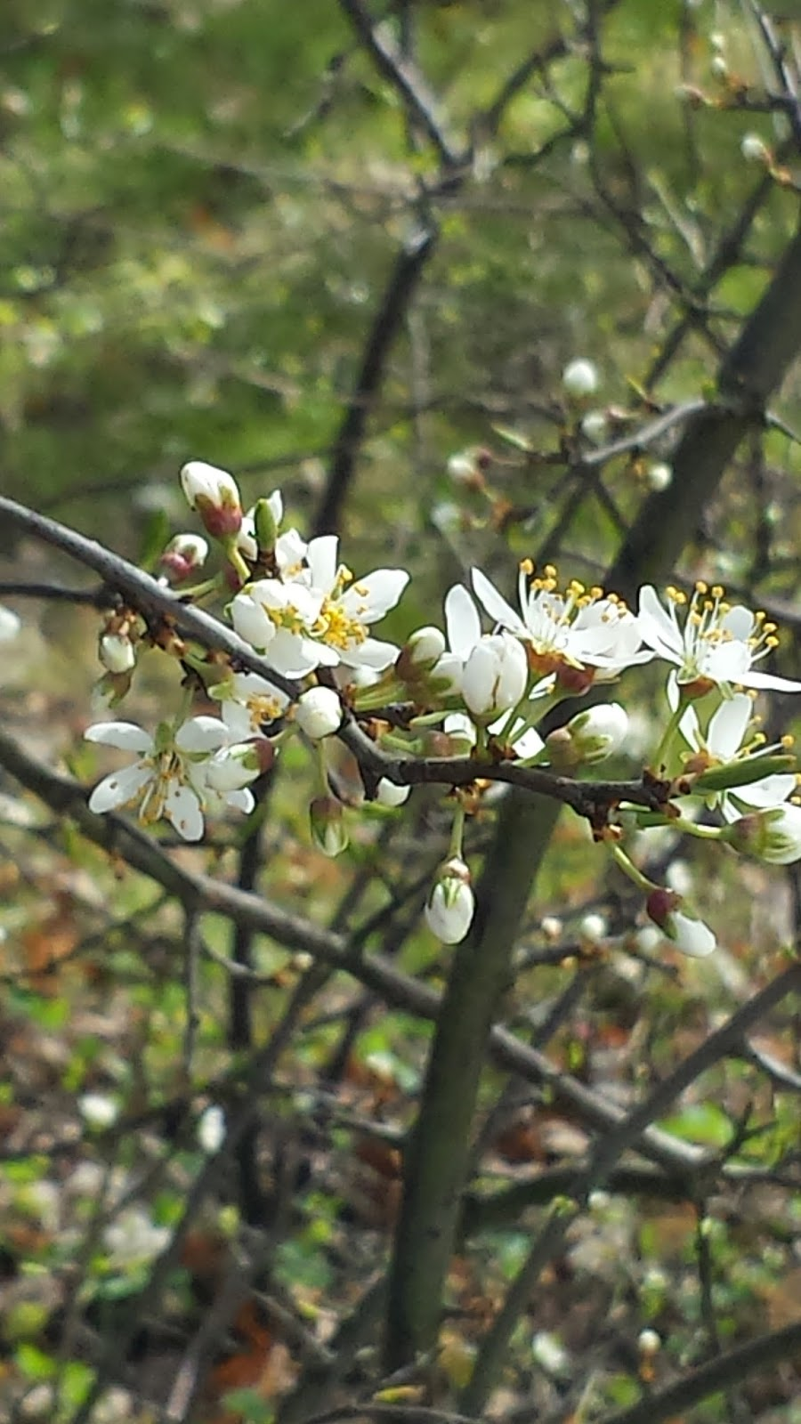 Blütenprachte im Frühling