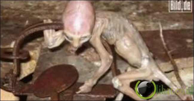 """Penampakan UFO dan Alien """"Mungil"""" di Malaysia"""