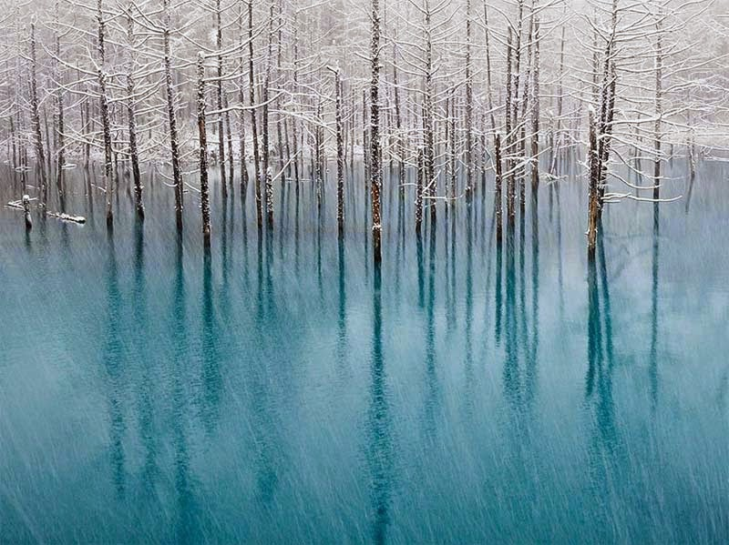 Blue Pond, Hokkaido, Kent Shiraishi