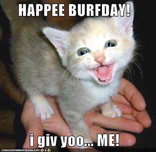 funny animals happy birthday funny animals happy birthday funny    Funny Happy Birthday Kitten