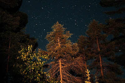 View of the stars through the trees on our campsite