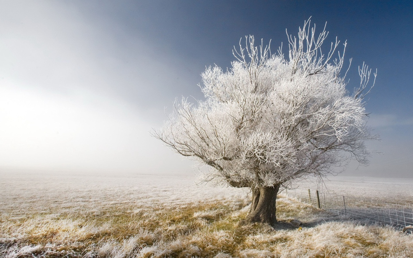 winter wallpaper free download saying pictures