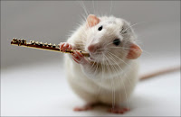 White rat playing clarinet