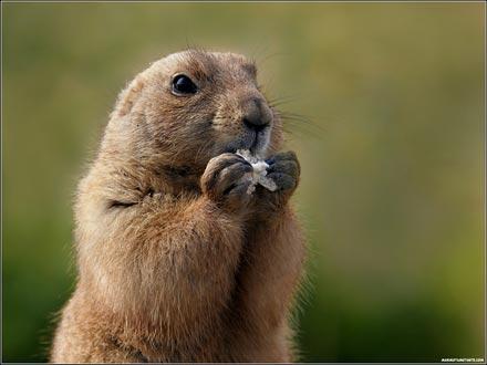 La hora de la marmota