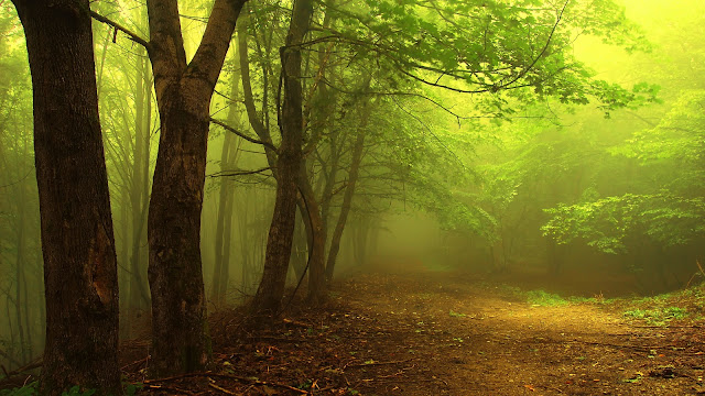Autumn Foggy Forest HD Picture
