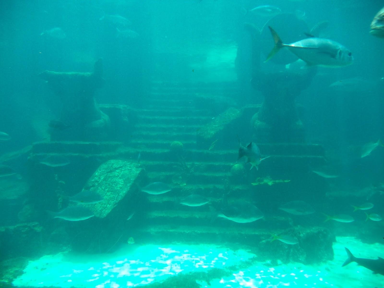 Pretty Little Dahlia Atlantis Adventure Photo Diary