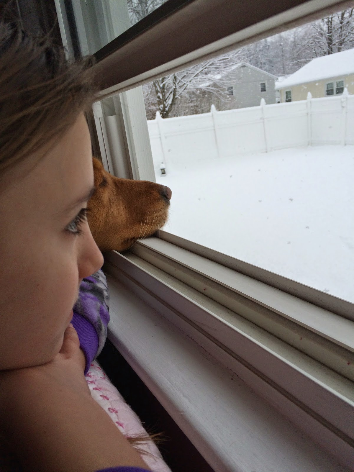 dog looking out window at snowflakes falling
