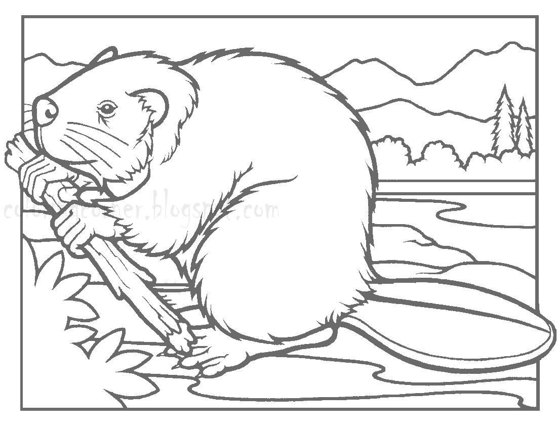 Printable Coloring Pages: Beaver Coloring Pages