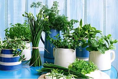 the garden of eden for gardeners garden tools world how to plant herbs indoors