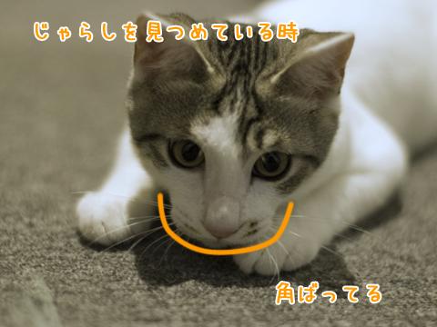 猫の顔が変形