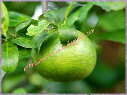 30.  ส้มเขียวหวานบางมด