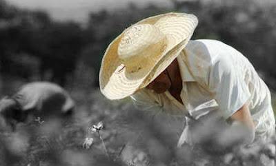 Agricultor Copolitica