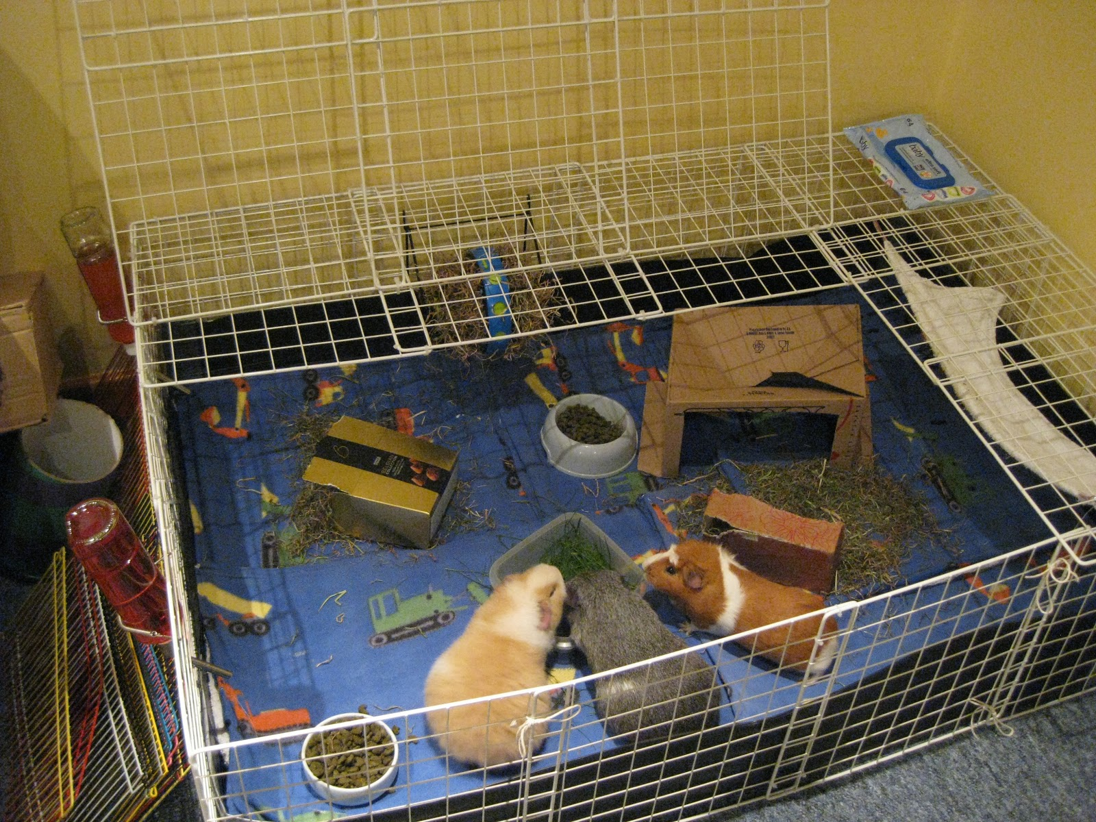 how to build a duck cage