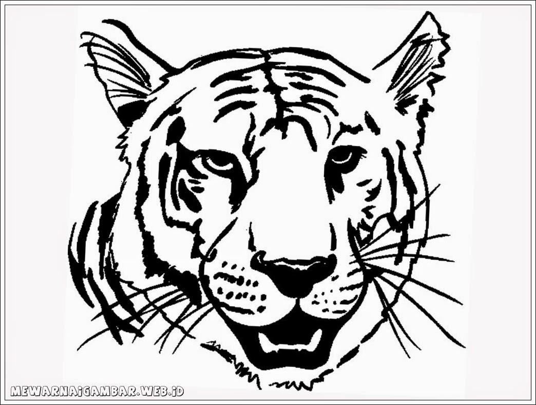 gambar mewarnai harimau