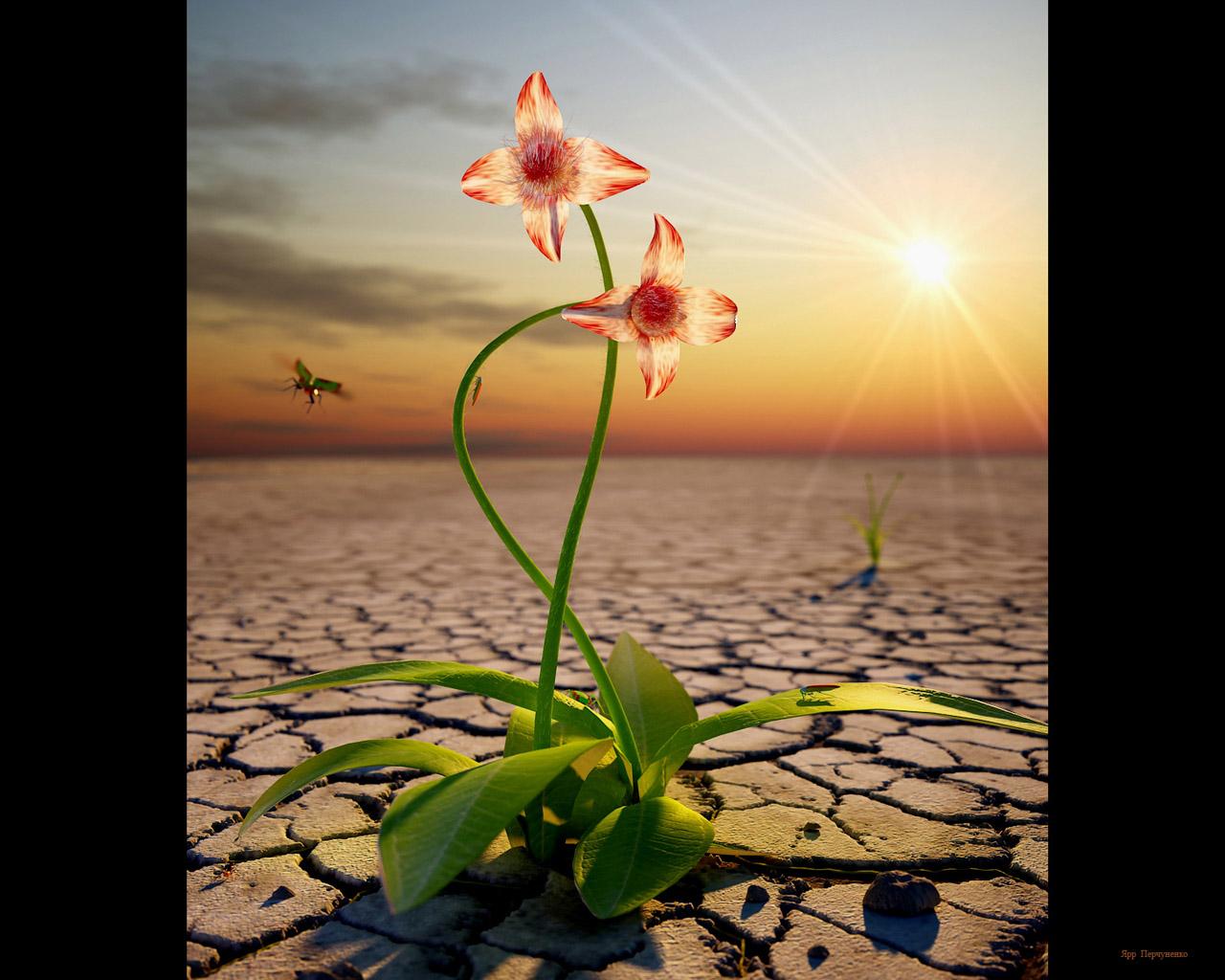 Цветы жизни 1 рассказы 8 фотография