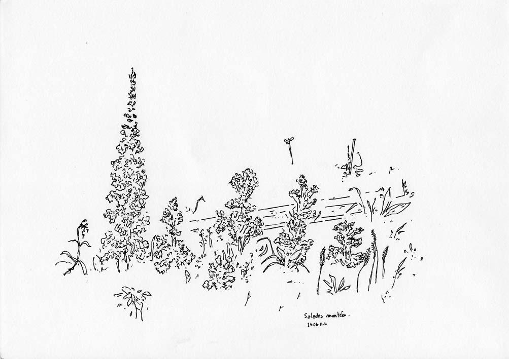 Le jardin des gateaux