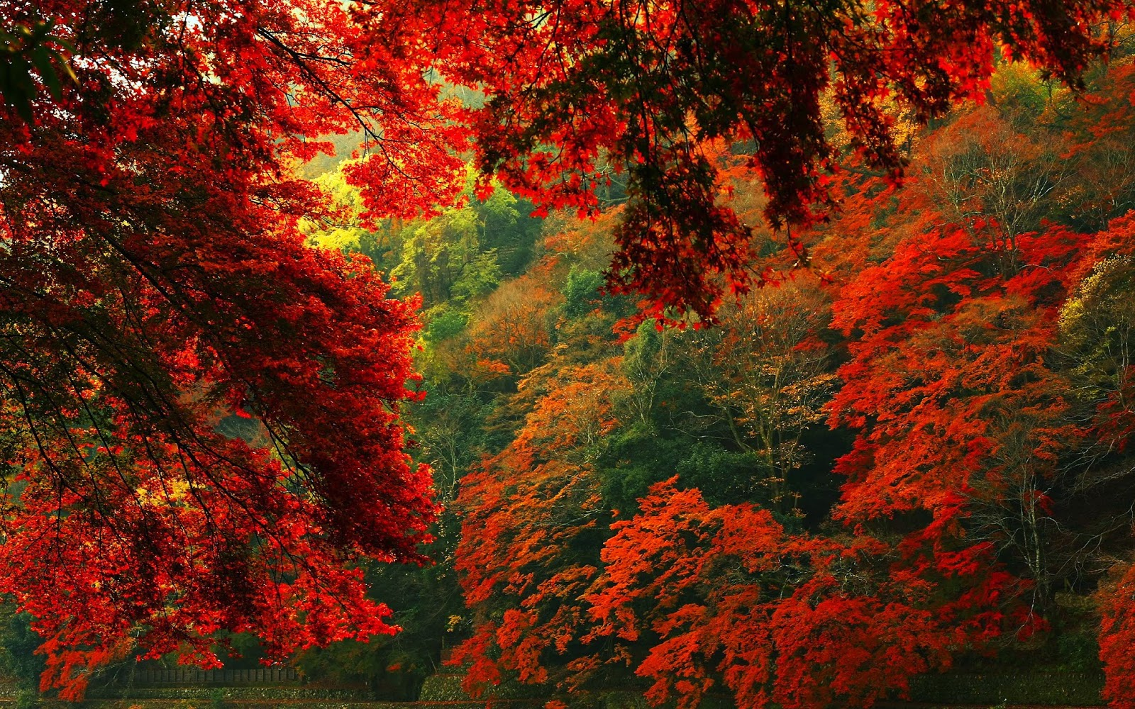 amazing red forest hd wallpapers ~ hyip bitz - hyip investment