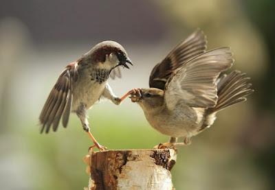 صورة غرائب وعجائب طيور