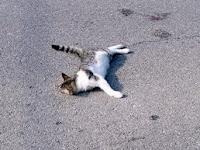 Kisah Kucing Digilis Kereta..adoi..!!!(18SG)
