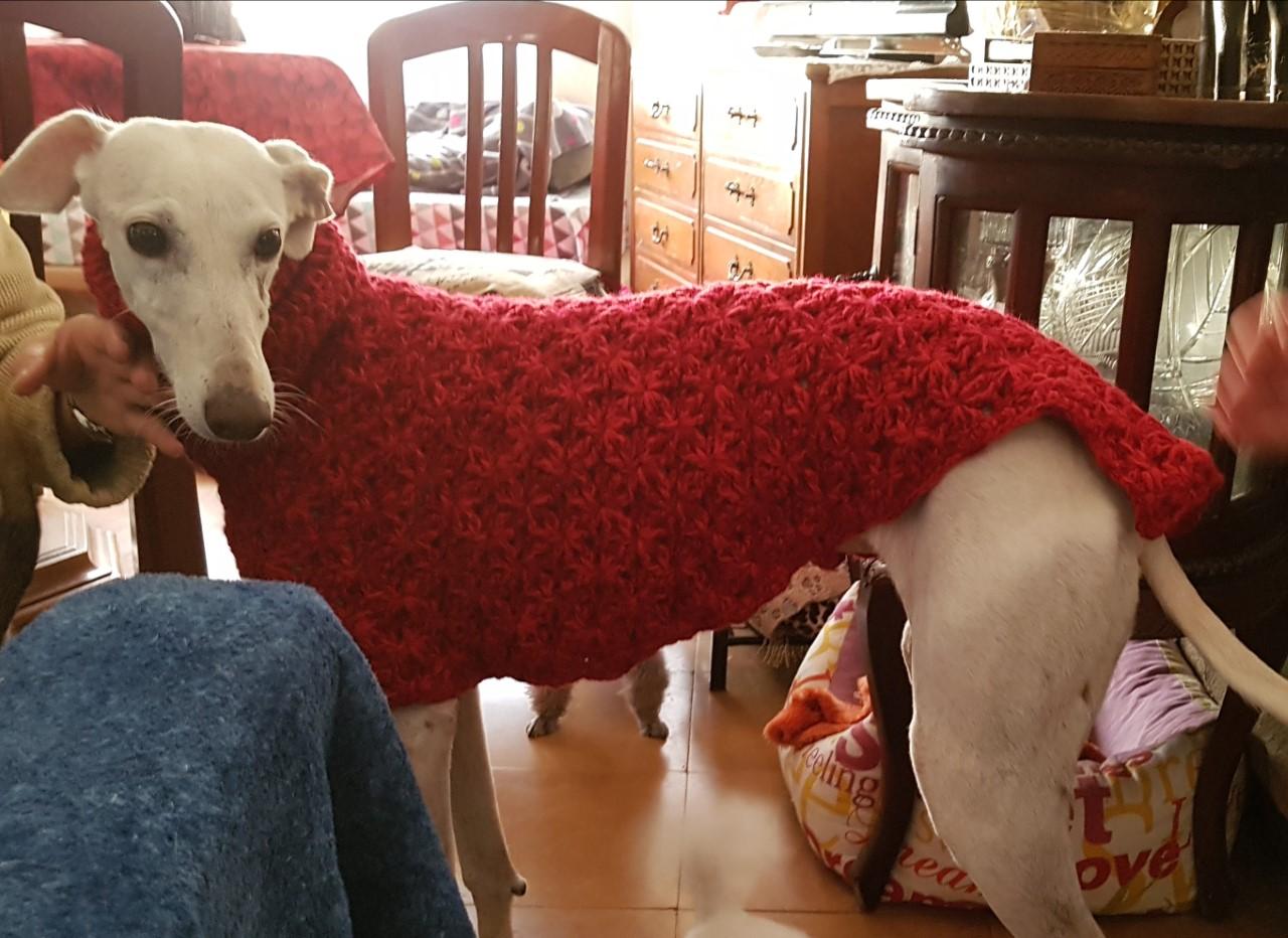 Roba de ganxet per gossos