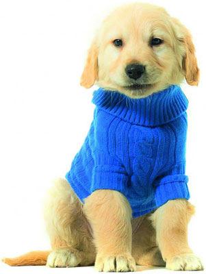 jerseys lana para perros Benetton