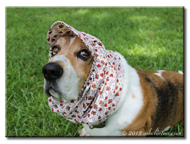 Bentley Basset wearing a heart and paw print designed snood.