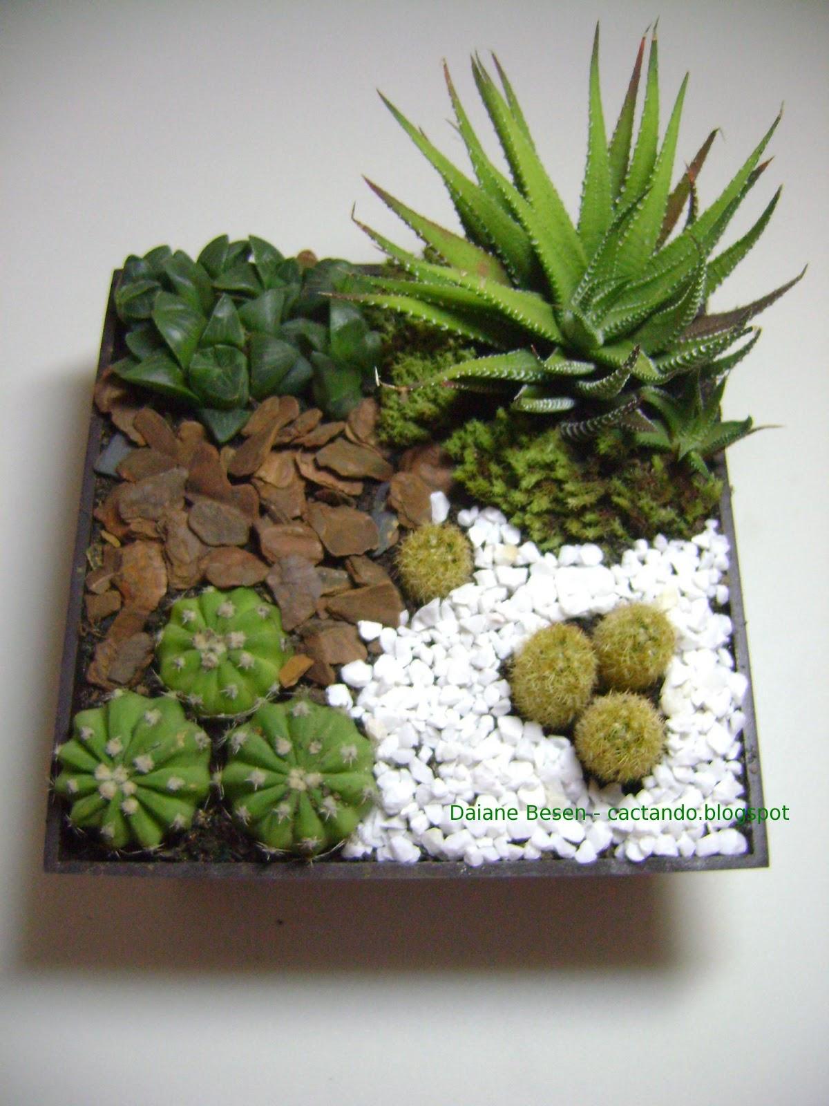 mini jardim de suculentas passo a passo : mini jardim de suculentas passo a passo:quinta-feira, 9 de maio de 2013