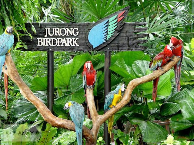 Du-lich-singapore-malaysia-Vuon-Chim-Jurong-02