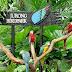 Chương trình du lịch Singapore hè 2015 giá rẻ nhất